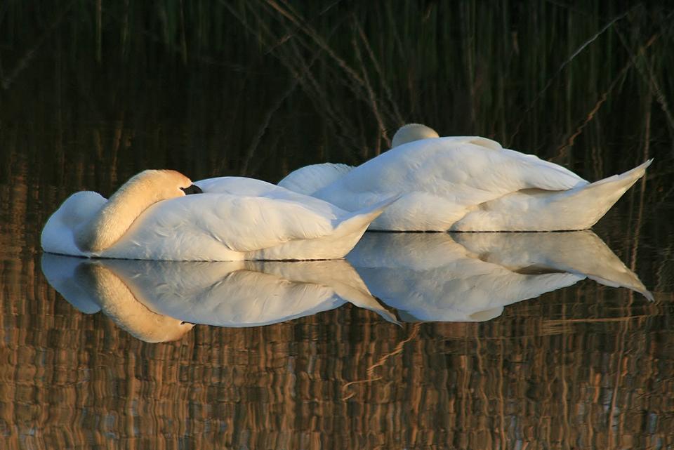 Sandra's hobby bird photography - Newborn Photographer Loughborough, SR Portraits